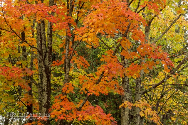 Honeymoon Trail Color
